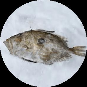 mar-mesa